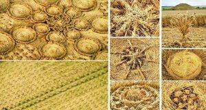 detale crop