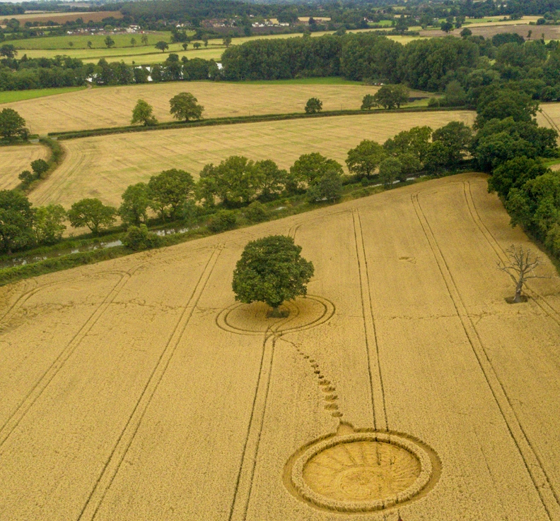 Monarch's Way, Nr Wooton Wawen, Warwickshire. Reported 7th August.