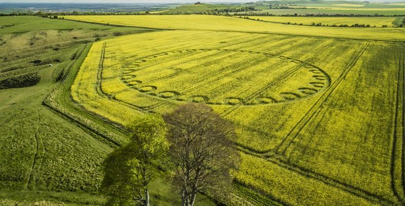 Oliver's Castle, Nr Devizes, Wiltshire. Reported 24th April
